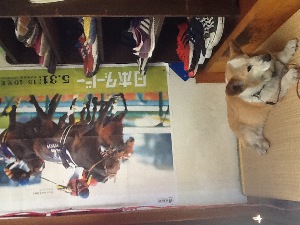 2014,5,29,hizume1.JPG